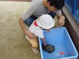 京都市動物園 ふれあい かめ