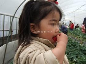 川西観光農園 苺おいしい!