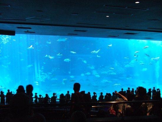 子供と美ら海水族館情報