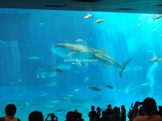 子供と美ら海水族館