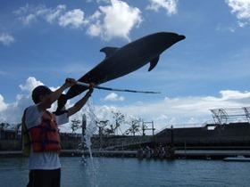 子連れde沖縄 イルカとふれあい