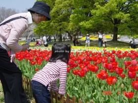 万博記念公園 チューリップ祭