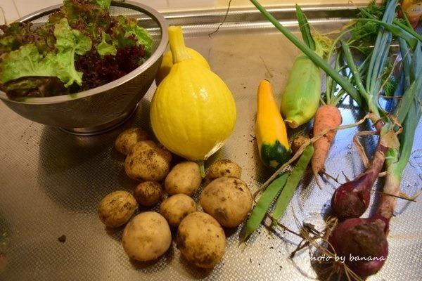 北海道子どもおすすめコテージ 中札内農村休暇村フェーリエンドルフ 野菜収穫