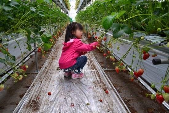 フェルム・デ・愛菜果 2段になってるイチゴ狩り