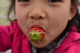 フェルム・デ・愛菜果 イチゴ狩り