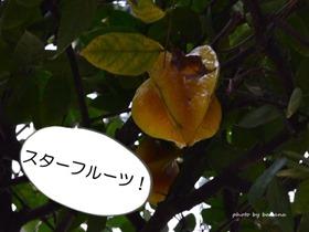 OKINAWAフルーツらんど スターフルーツ