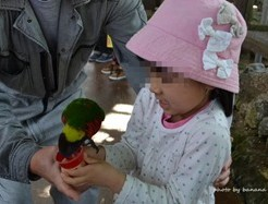 OKINAWAフルーツらんど 鳥餌付け
