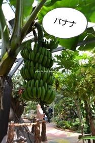 OKINAWAフルーツらんど バナナ