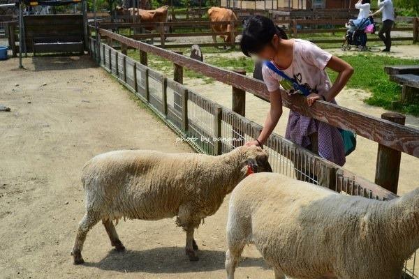 ブレーメの丘 羊ふれあい