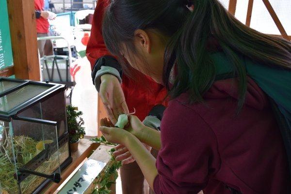 熊本観光 阿蘇カドリードミニオン パンダマウスふれあい