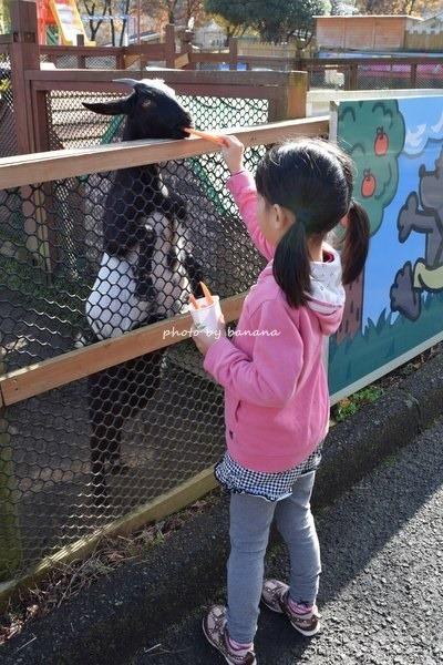 熊本観光 阿蘇カドリードミニオン 動物ふれあヤギ