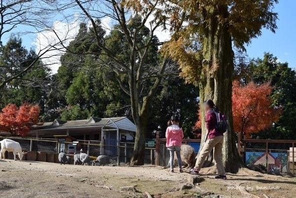 熊本観光 阿蘇カドリードミニオン 遊具ある公園
