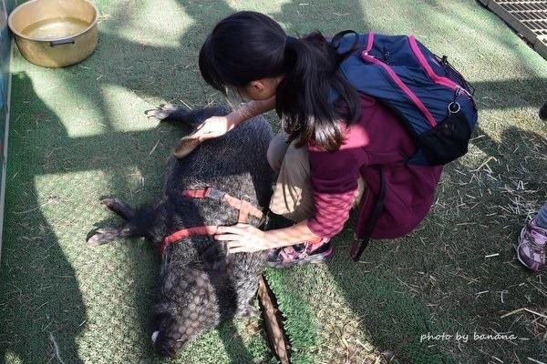 熊本観光 阿蘇カドリードミニオン 動物ふれあい豚
