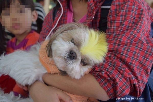 熊本観光 阿蘇カドリードミニオン ワンワン犬ふれあい
