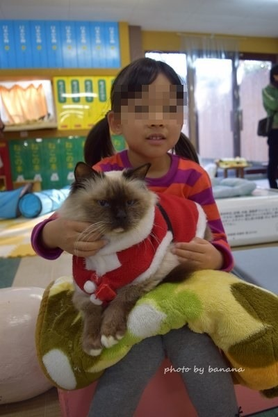 熊本観光 阿蘇カドリードミニオン 猫ふれあい