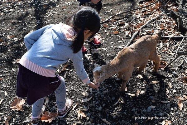 くじゅう自然動物園 動物餌やり
