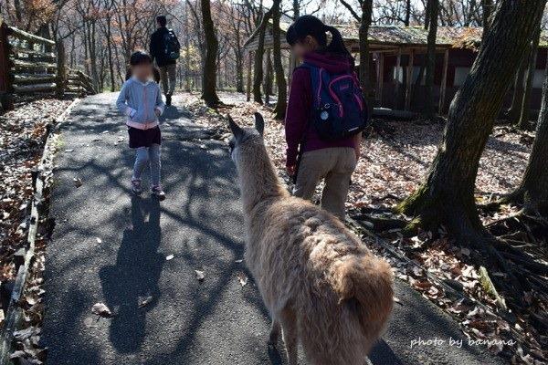 くじゅう自然動物園 阿蘇子ども動物触れ合い