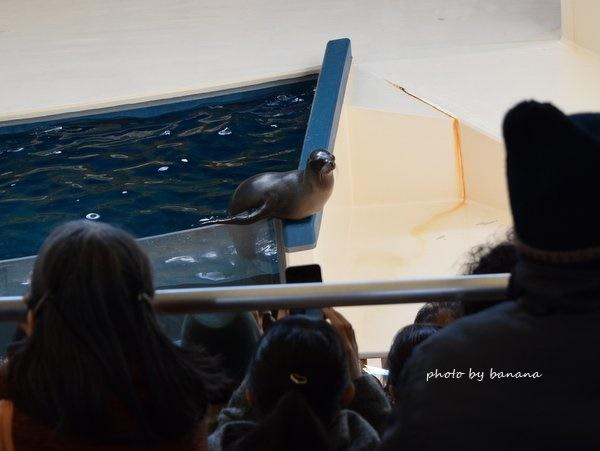 鳥羽水族館 アシカショー 撮影スポット