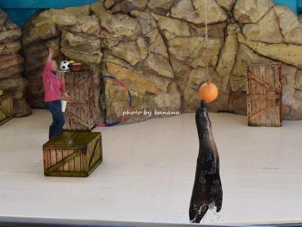 鳥羽水族館 アシカショージャンプ