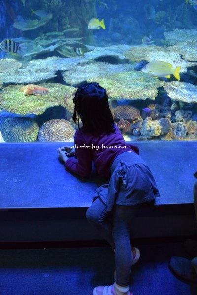 鳥羽水族館 コーラルリーフダイビング 水のトンネル