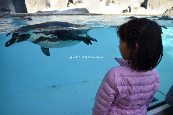 子供と鳥羽水族館 ペンギンかわいい