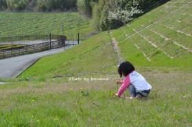 フルーツフラワーパーク 芝生