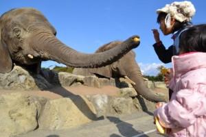 アドベンチャーワールド 象