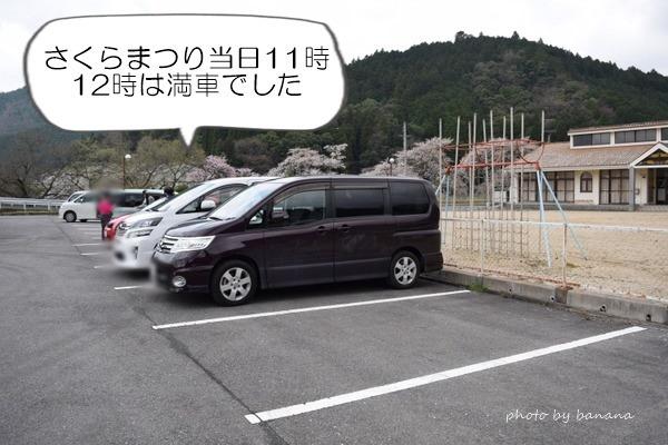 うぐい川(鮎河)千本桜お花見 駐車場