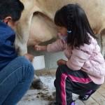 もくもく手作りファーム 乳しぼり牧場体験