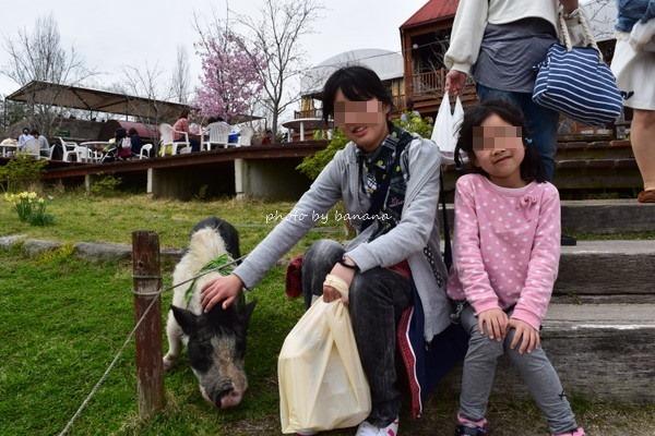 もくもく手作りファーム 豚
