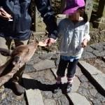 子供連れ奈良観光・東大寺