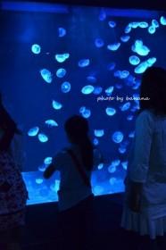 京都水族館 くらげ
