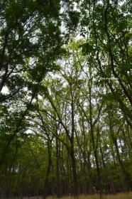 大泉緑地 森林