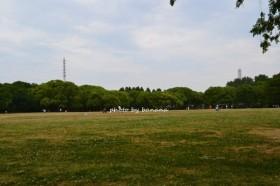 大泉緑地 芝生広場