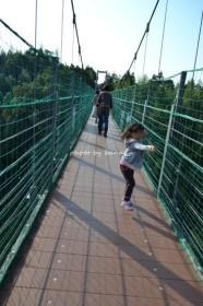 ハーベストの丘 揺れる吊り橋