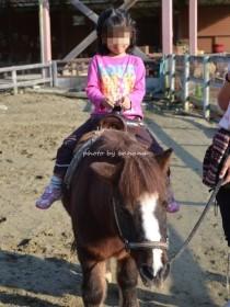 ハーベストの丘 ポニー乗馬