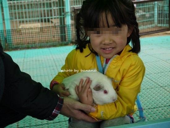 姫路市立動物園 ふれあいモルモット