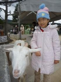 京都市動物園 小動物ふれあい