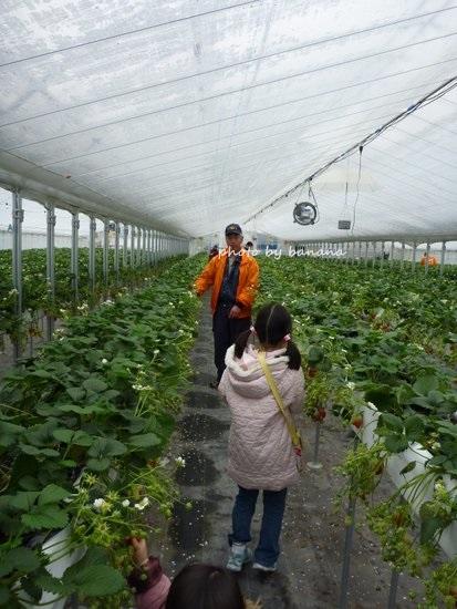 大阪近郊のイチゴ狩り