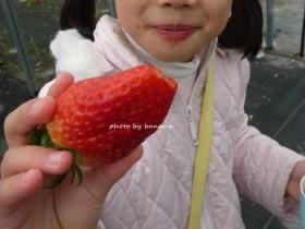 華やぎ観光農園 精華町のイチゴ狩り