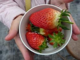華やぎ観光農園 あまいイチゴ