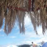 南紀白浜 白良浜海水浴場 ヤシの木パラソル
