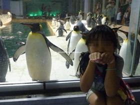 南紀白浜アドベンチャーワールド ペンギン