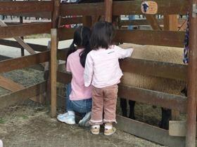 伊賀の里モクモク手作りファーム 羊