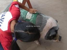 伊賀の里モクモクファーム 豚だんご