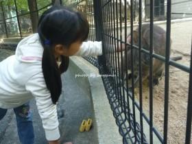 池田市立五月山公園 ふれあい動物園 ワラビー