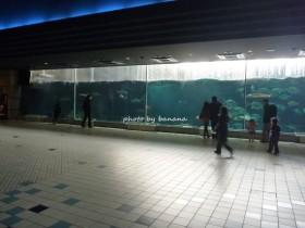 神戸市須磨水族館 大水槽