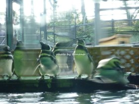 神戸市須磨水族館 ペンギン