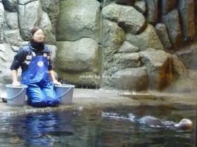 神戸市須磨水族館 ラッコ