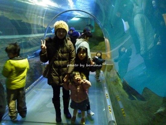 神戸市須磨水族館 トンネル